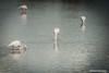 Aiguamolls de l'Emporda (oscaradelan) Tags: aiguamollsdelemporda naturalpark parquenatural fauna humedales marismas flamenco catalunya spain españa lago waterfall