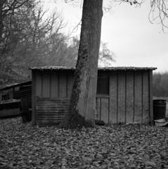 La cabane de chasseur (netslider57) Tags: bronica mediumformat moyen format kodak trix iso400 blackwhite blackandwhite blackandwhitephotography noiretblanc moselle france lorraine