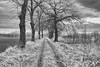 _MG_3039_Pbw (grzegorz_63) Tags: sunrise bw dirttrack trees branches grass field sky clouds outside nature perspective canon70d