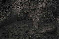 Mutter Erde - Mother Earth (Bernd Kretzer) Tags: erde earth baum tree wurzeln roots minolta md rokkor 50mm 114