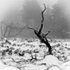 wild! (m_laRs_k) Tags: blackforest germany monochrome monotone blackandwhite schwarzweiss 7dwf outdoors landscape
