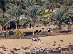Egypte, le Canal de Suez, la vie des habitants le long du canal (Roger-11-Narbonne) Tags: canal suez egypte bateau