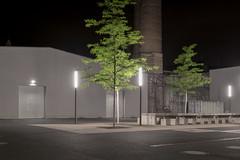 We often thought of trees (Markus Lehr) Tags: trees urbanspace nightshot nightphotography concrete tarmac nopeople peoplelessness humanartifacts longexposure berlin germany markuslehr