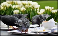 Nicht vergessen !!! (SpitMcGee) Tags: sommerzeit von2auf3uhr tauben pigeon kuchenrest cakeleftovers london kewgarden orangerie spitmcgee explore 43