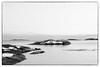 Crow`s View (Eline Lyng) Tags: monochrome monochrom bw blackandwhite animal bird crow seascape landscape nature sea water isle islet larkollen norway sunset view leica s 007 leicas mediumformat winter snow horizon