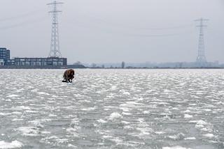 Frozen IJmeer in Ijburg, Amsterdam