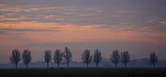 morning grouping (Wöwwesch) Tags: sonnenaufgang netherlands nederland bomen weiland landschap zonsopgang sunrise landscape trees sky hemel silhouettes niederlande color pasture molen windmühle windmill