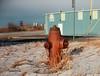 mikes firehydrant (HOOVER14) Tags: wyoming fire hydrant kodak brownie target 620 box camera ektar 100 color film mills