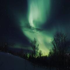 Lady dansing in the sky (dinni69) Tags: auroraborealis aunfjellet mountain norway norge harstad winter vinter stjerner stars trees dancing skye