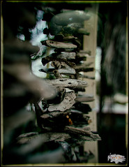 023/365 - Driftwood (RWGJ) Tags: 50mmf18 artisticborder artisticframe black blue bokeh brown color colour cyan d4s dslr depthoffield dof driftwood dusk evening fx50mmf18 gray green lightleak nikkor nikon nikond4s nikonfx50mmf18 orange outdoor portrait summer twilight vertical white medowie newsouthwales australia au