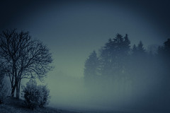 Night Fog (Robert Bauernhansl) Tags: trees fog winter cold kalt nebel nebelig foggy landscape landschaft night nacht
