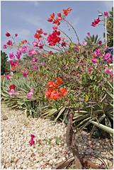 dubai 21 (beauty of all things) Tags: vae uae blumen flowers dubai