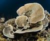 Hard coral (Cruising, traveling & dive pics.) Tags: 2017 png coral