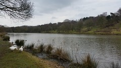 Miller's Pond (Week 38/52) (Mick PK) Tags: hardwick hardwickpark nationaltrust millerspond derbyshire eastmidlands england uk hdr cameraphone samsunggalaxys5 samsung galaxy s5 geese pond water tree trees sky cloud 5252 android