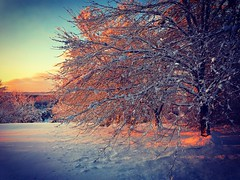 After The Blizzard - 8 March 2018 (Christian Montone) Tags: montone christianmontone landscape winter snow njnewjersey weather storm nature blizzard noreaster snowfall morning sunrise sun mood instamood instagram light sky
