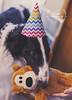 Birthday Boy (Proper Photography) Tags: borzoi borzoipuppy starswiftborzoi russianwolfhound wolfhound dog canine domesticdog domestic pet petdog petography petphotography petportrait cute adorable handsome blackandwhite brindle winter 2018 birthday march march2018 properphotography noellebabinski