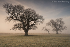The Beauty Of Trees (.Brian Kerr Photography.) Tags: cumbria edenvalley lazonby landscapephotography photography landscape briankerrphotography tree mistymorning mist nature naturallandscape natural outdoor outdoorphotography opoty onlandscape formatthitech firecrest vanguarduk sonyuk a7rii briankerrphoto