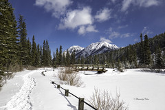 Frozen ponds (Canon Queen Rocks (2,037,000 + views)) Tags: mtlauretteponds snow winter alberta kananaskis canada sky scenery scenic clouds colours bluesky blues trees tree forest fence bridge mountains nature momentsbycelinecom ice frozen landscape landscapes pond mountain