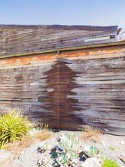 Spruce Shadow (Kristi Traynor) Tags: garden rainchain barnwood barn siding wood rain shadow tree