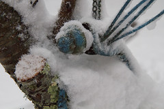 Blue Metal Dragonfly in Snow (brucetopher) Tags: snow winter blizzard sculpture metal tree lichen blue green