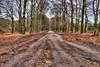 Spring arriving like Autumn (Skylark92) Tags: nederland netherlands holland gelderland ede hoge veluwe hdr tonemapped