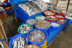 Fresh Fish ,Kochi P1250740 (Phil @ Delfryn Design) Tags: india2018 kochi