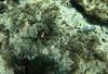 Apo island coral and sea turtle trip-1-9 (walterkolkma) Tags: apoisland philippines negrosoriental seaturtle snorkeling coral reef sun sea visayas siquijor turtle gopro