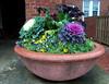 Hendrix Planter 001 (Val Hightower) Tags: planter pansies decorativecabbage wintercabbage cabbage winterkale decorativekale kale hendrixcollege hendrix conwayarkansas conway arkansas