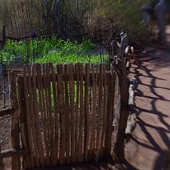 The Rancher's Garden (MPnormaleye) Tags: fence border garden plants shadows patterns desert arizona lensbaby 35mm seeinanewway utata