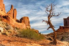The Sentry (KPortin) Tags: archesnationalpark tree trail rockformations sandstone cliffs landscape htt utah boulders deadtree