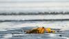 Remnants (jillyspoon) Tags: seaweed bokeh beach sea canon scotland coast horizontal sunshine evening light