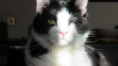 Maya (Maurizio T.) Tags: gatto gatta micio micia gato cat pussy chat кот قط katze 貓 猫 γάτα बिल्ली kucing
