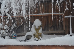 BRRR BEAR- (Arlene Castro) Tags: marchsnowstorm bearstatue backyard