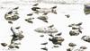 Lapwings (Rob Blanken) Tags: lapwing vanellusvanellus kievit
