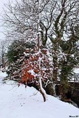 Photos Marco BP (7)_GF (marcbihanpoudec) Tags: bretagne neige plabennec plan deau lac banc arbres