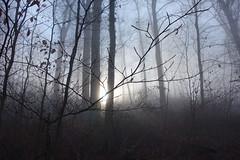 Misty (*Tom68*) Tags: wald forest nebel fog baum tree sunrise sonne sun wood