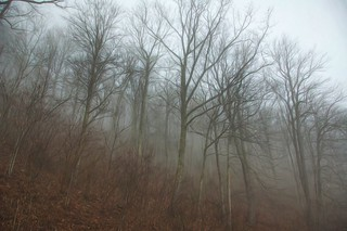 Foggy Forest 29
