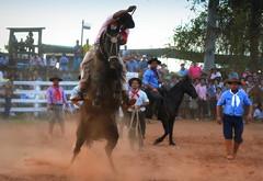 Dionatan Carvalho e Macaca da Tradição (Eduardo Amorim) Tags: gaúcho gaúchos gaucho gauchos cavalos caballos horses chevaux cavalli pferde caballo horse cheval cavallo pferd pampa campanha fronteira quaraí riograndedosul brésil brasil sudamérica südamerika suramérica américadosul southamerica amériquedusud americameridionale américadelsur americadelsud cavalo 馬 حصان 马 лошадь ঘোড়া 말 סוס ม้า häst hest hevonen άλογο brazil eduardoamorim gineteada jineteada