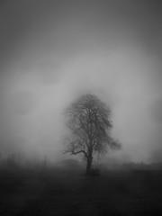 seul sous la pluie (objet introuvable) Tags: blackandwhite bw noiretblanc nb tree arbre nature pluie rain landscape lumixgx8 lumière ombre shadow light monochrome