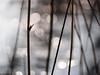 light and lines (apalca) Tags: gelderland ijs liendensewaard tegenlicht verschijnsel light licht sun zon bokeh reed riet stalk circles lines