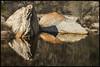 Sabino Canyon #45 2018; Boulders in the Creek (hamsiksa) Tags: water creeks streams brooks waterinthedesert canyons sabinocanyon santacatalinamountains sonorandesert skyislands sabinocanyonnationalrecreationarea coronadonationalforest nationalforests arizona tucson pimacounty reflections rocks stones geology basinrange