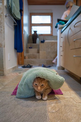 Happy Cat (El Cajon) Tags: cat shower towel
