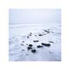 Wadden sea II (Bert Vliegen) Tags: sea frozen fujiprovia100f ice hasselblad500cm distagon50mmfle netherlands nederland epsonv750