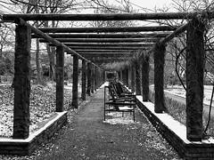 chairs (FotoTrenz NRW) Tags: chairs snow geometry perspective botanischergarten blackandwhite bw monochrome march seasons nrw ruhrgebiet duissern duisburg