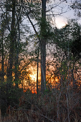 Sun Setting. (dccradio) Tags: lumberton nc northcarolina robesoncounty outside outdoors evening lateafternoon dusk sky bluesky colorfulsky eveningsky tree trees treelimbs treebranches woods wooded forest backyard branches branch sticks nature natural nikon d40 dslr sunset settingsun