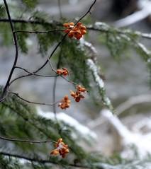 _DSF2270 (Vladimir Gazoukin) Tags: canada country close winter water trees vladimirgazoukin midhurst nature snow