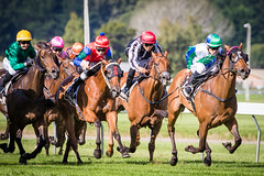Last race of the day at Trentham (NZL365) Tags: horseracing horses gallops galloping thoroughbreds trentham sportsphotography sportsfan sport sports action canon7dii 365days 365photochallenge 365project photoaday project365
