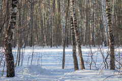 2018-03-19-08-33-58-7D2_3990 (tsup_tuck) Tags: 2018 march moscow spring woods