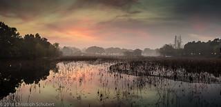Sunrise over lotus field