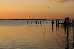 Midnight Confessions (Michiale Schneider) Tags: water post pier sunset silhouette pelican birds landscape pineland florida michialeschneiderphotography bird sky orange black